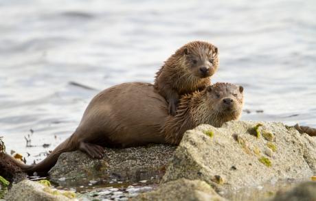 Seals basking in the sunshine around Ardgour