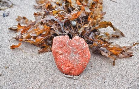 Heart shaped stone on Ardgour Beach